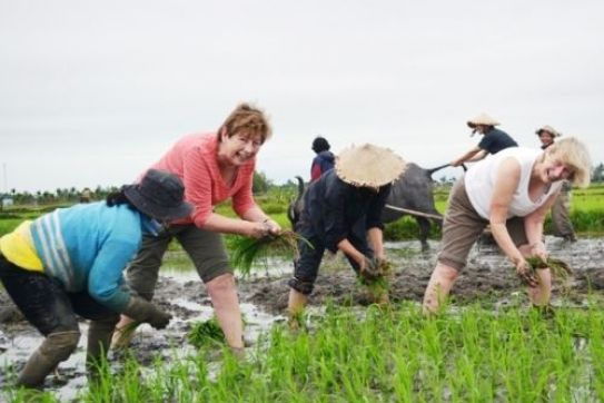 Viet Nam's agritourism aims to tap massive potential