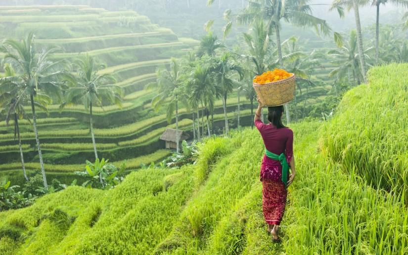 Bali Indonesia Ubud