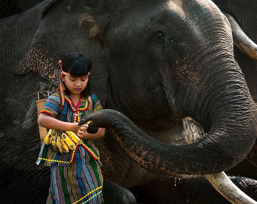 Award winning photographs present Vietnam's charm picture 6